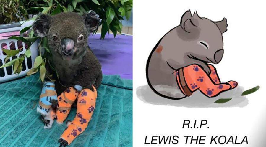 lewis the koala